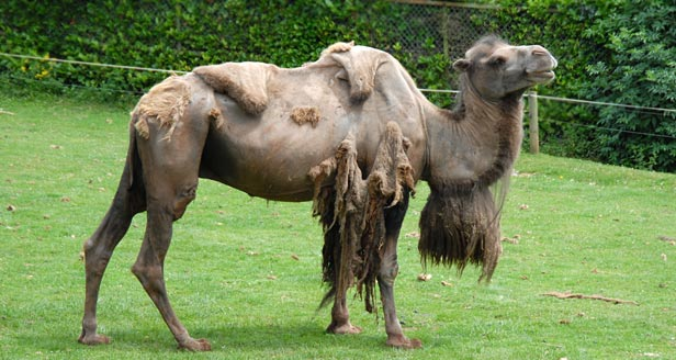 Interesting Facts about CAMELS ***