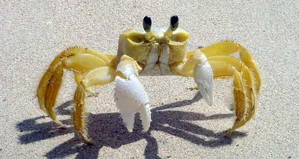 Interesting Facts about the CRAB