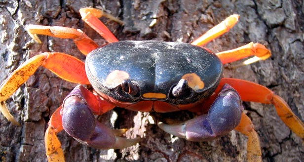 Interesting Facts about the CRAB ***
