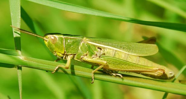 plant anatomy facts with Facts About Grasshoppers on Profile also Chloroplast together with Nuclear Rod Radiation Plutonium Tube additionally Matthias Jacob Schleiden further 08.