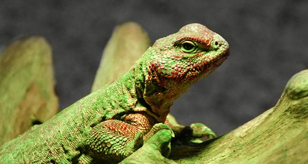 Fun Facts About Lizards For Kids
