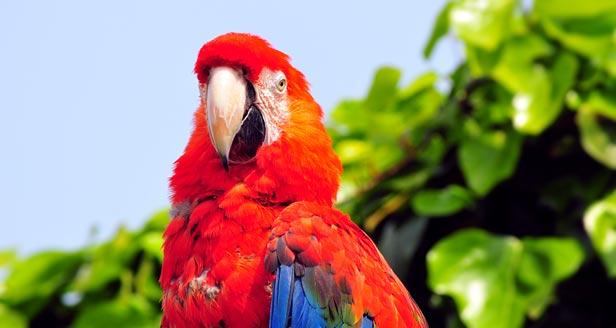 Parrots Facts Pets Fact 24 Parrots Classified