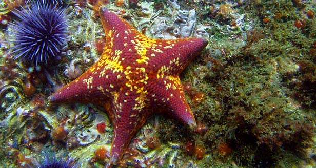 Interesting Facts about the STARFISH ***